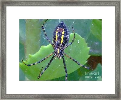 Pet My Belly Framed Print by Deborah DeLaBarre