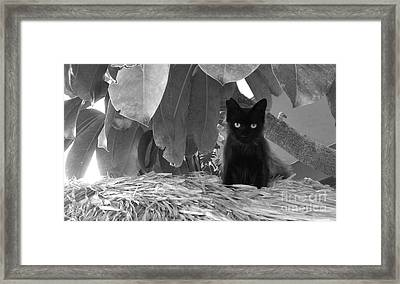 Pet Portrait - Boo Framed Print