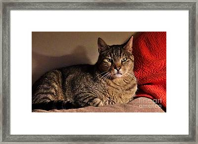 Pet Portrait - Max The Cat Framed Print