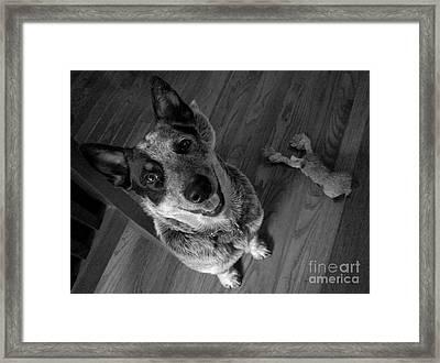 Pet Portrait - Forrest Framed Print