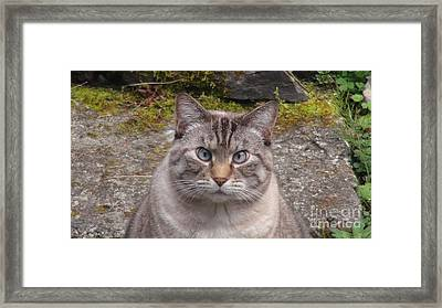 Pet Portrait - Lily Two Framed Print