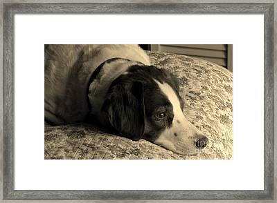 Pet Portrait-waiting For Mom Framed Print
