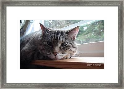 Pet Portrait - Lily The Cat Framed Print