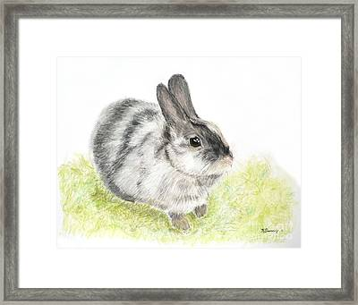 Pet Rabbit Gray Pastel Framed Print by Kate Sumners