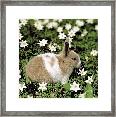 Pet Rabbit Framed Print by Hans Reinhard/Okapia