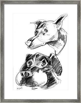 Pet Sketches 5 Framed Print