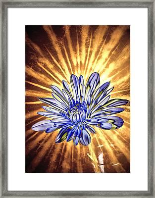 Petal Blast Framed Print by Bill Tiepelman