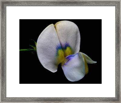 Petal Paint Framed Print