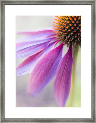 Petal Pink Framed Print by Caitlyn  Grasso
