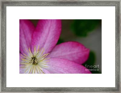 Petals Framed Print by Aimee Lyn