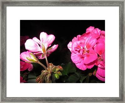 Petals And Buds Framed Print