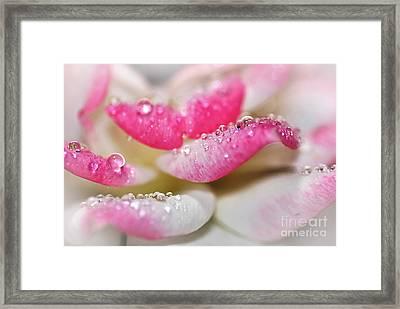 Petals And Droplets Framed Print