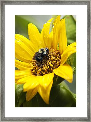 Petals And Drops Framed Print by Christina Rollo