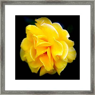 Petals And Lace Framed Print by Karen Wiles