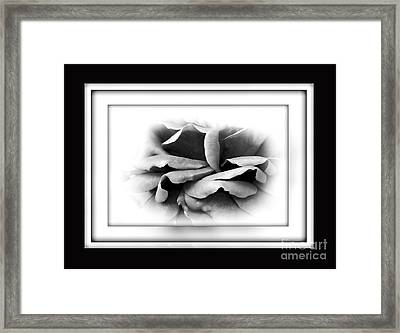 Petals And Shadows 2 Framed Print