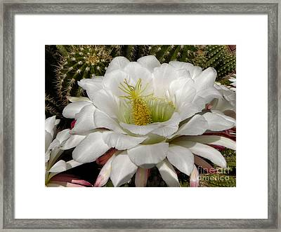 Framed Print featuring the photograph Petals And Thorns by Deb Halloran