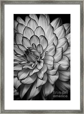 Petals Framed Print by Carrie Cranwill