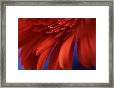 Petals Framed Print by Connie Handscomb