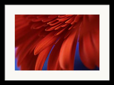 Exotic Flower Framed Prints