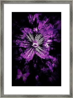 Petals From The Purple Framed Print by Amanda Eberly-Kudamik