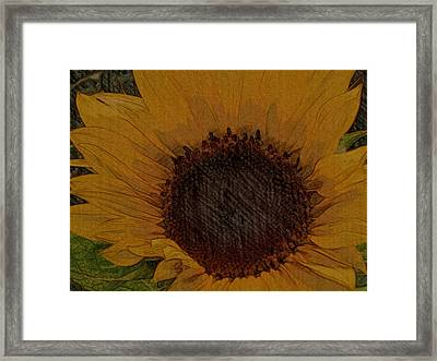Petals From The Sun Framed Print by Constance Carlsen