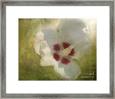 Framed Print featuring the photograph Petals In Shadows by Kathi Mirto