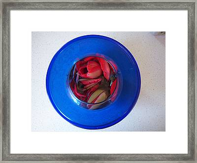 Petals In Vase In Vase Framed Print by Conor Murphy