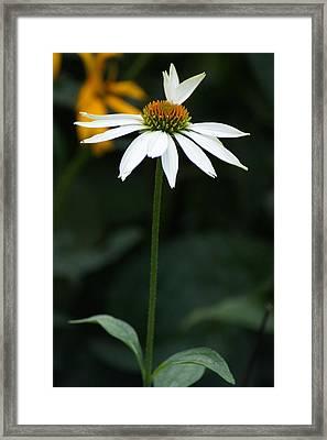 Petals Framed Print by Joe Bledsoe
