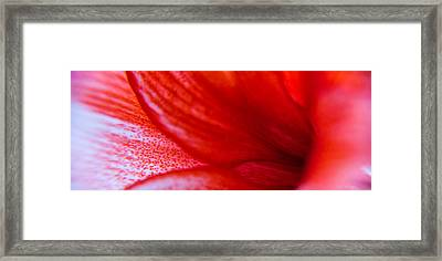 Petals Of A Lily Framed Print by Kim Lagerhem