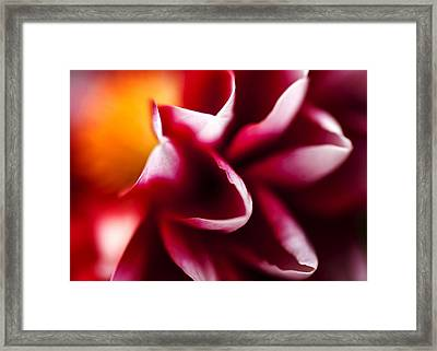 Petals Of An Aster Framed Print