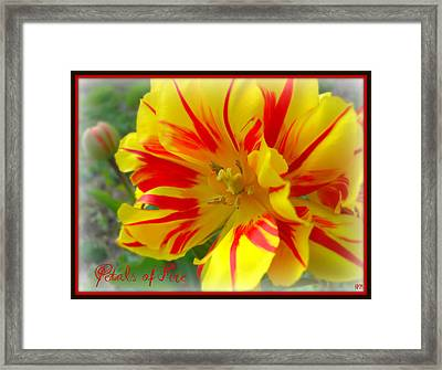 Framed Print featuring the photograph Petals Of Fire by Heidi Manly