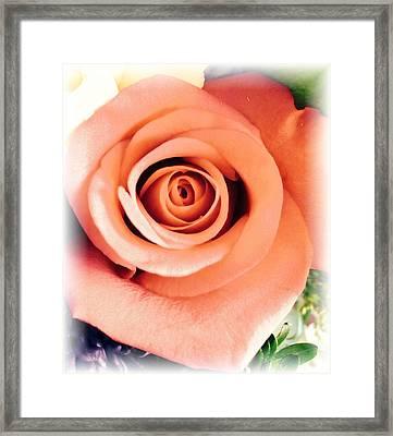 Petals Of Peach Framed Print