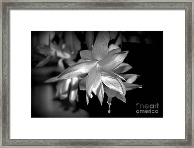 Petals Of Silver Framed Print