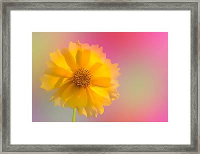 Petals Of Sunshine Framed Print by Fred Larson