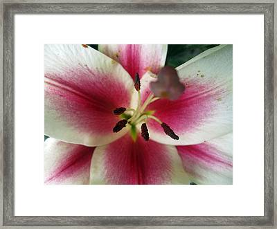 Petals Of Watermelon Framed Print by Mike Podhorzer