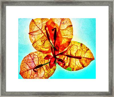 Petals On Blue Framed Print