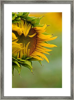 Framed Print featuring the photograph Petals by Ronda Kimbrow