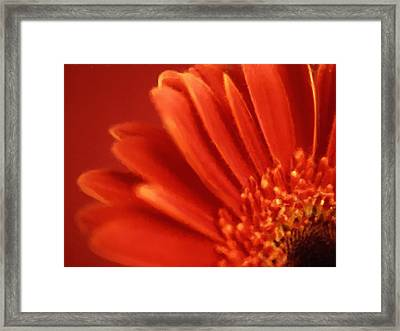 Petals Framed Print by Studio Maeva
