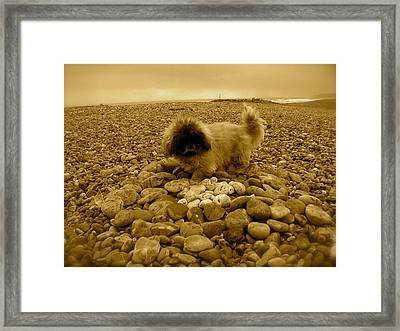 Pete With His Pebble Collection Framed Print by Samantha Wakefield