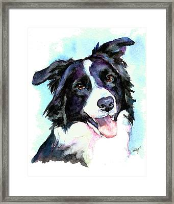 Petey Border Collie Framed Print