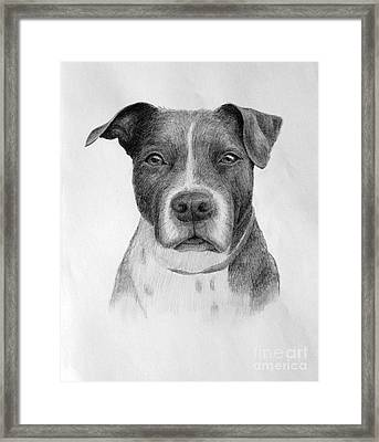 Petey Framed Print by Denise M Cassano