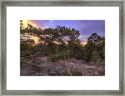 Petit Jean Mountain Bonsai Tree - Arkansas Framed Print