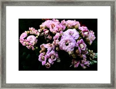 Petite And Pink Framed Print