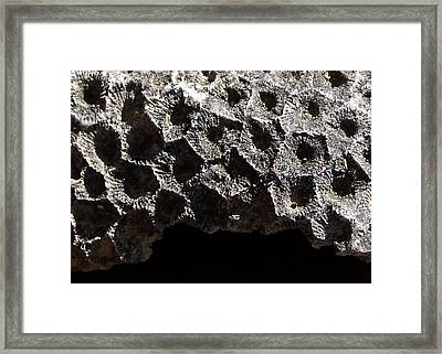 Petoskey Stone Framed Print