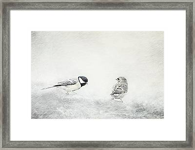 Petrels Framed Print by Heike Hultsch
