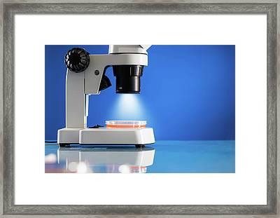 Petri Dish Under Microscope Framed Print by Wladimir Bulgar