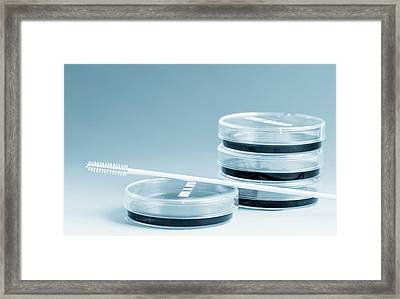 Petri Dishes And Cell Sampling Brush Framed Print