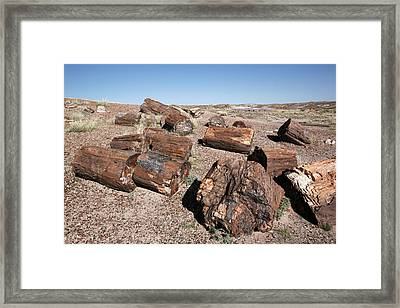 Petrified Forest Framed Print