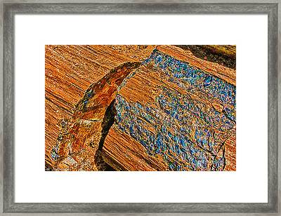 Petrified Forest Logs Framed Print by Bob and Nadine Johnston
