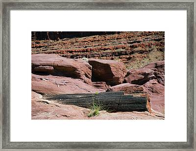 Petrified Log And Sandstone Framed Print